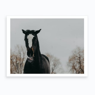 Horse And Snow 3 Art Print