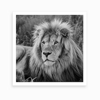 Lion Male Art Print