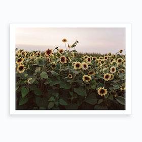 Sunflowers Of Provance  Art Print