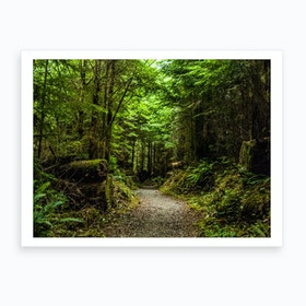 Lake Quinault Trail Art Print