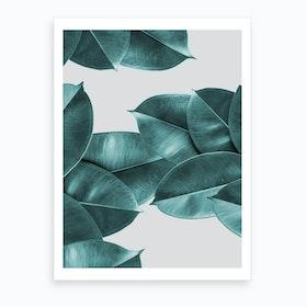 Green Ficus Leaves Art Print