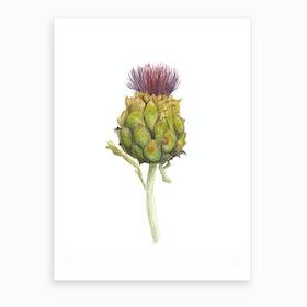 Botanical Illustration   Cynara Carduculus Art Print