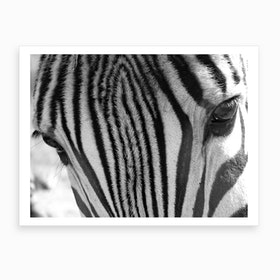 Zebra Eyes Art Print