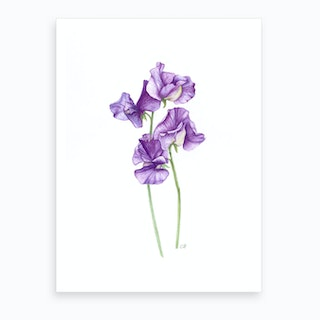 A Posy Of Sweet Peas Art Print