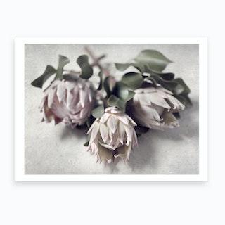 Pale Proteas 1 Art Print