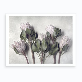 Pale Proteas 2 Art Print