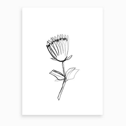 Protea I Art Print