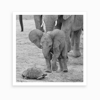 Elephant Baby 9641 Art Print