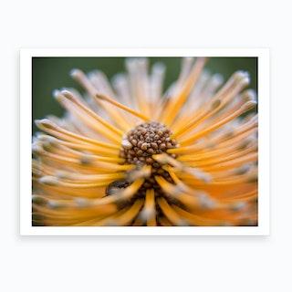 Banksia And Beetle Art Print