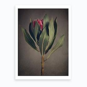 Red Protea 2 Art Print