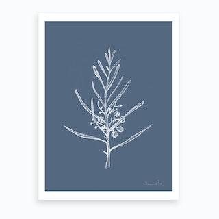 Blackwood Sapling Art Print