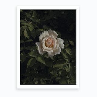 Rococo Rose Art Print