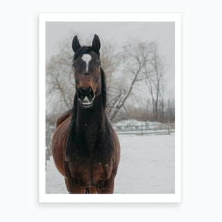 Horse And Snow 2 Art Print