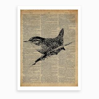 Wren Bird Art Print