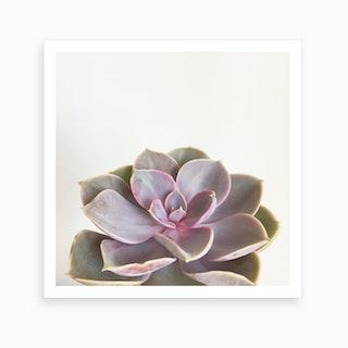 Succulent Pink Art Print