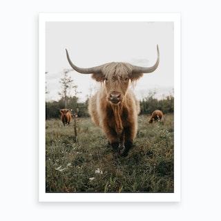 Highland Cow On The Farm Art Print