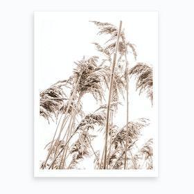 Autumn Reeds II Art Print