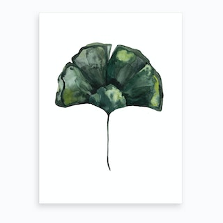 Botanical Illustration Ginko Art Print