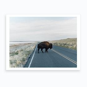 Bison Crossing Art Print