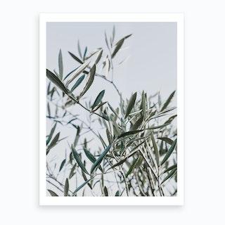 Olive Tree I Art Print