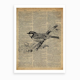 Sparrow Bird Art Print