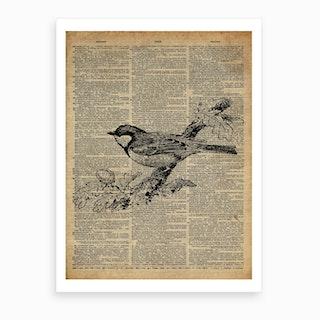 Sparrow Bird Art Print
