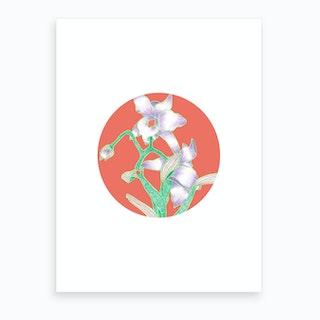 Daisy Hybrid Art Print