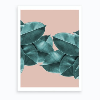 Green Blush Ficus Leaves Art Print