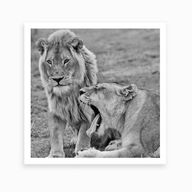 Lion Couple Art Print