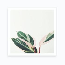 Pink Leaves Iii Art Print