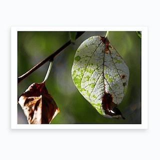White Leaf Art Print
