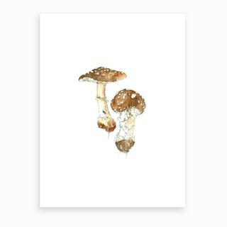 Toadstool Miniature Art Print