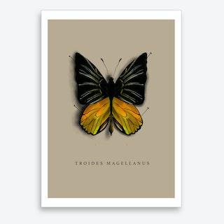 Butterfly No7 Art Print