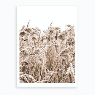 Golden Grass II Art Print