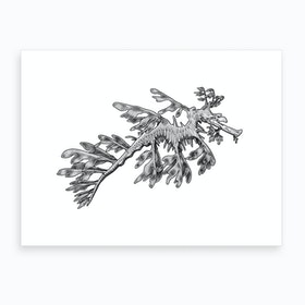 Leafy Sea Dragon Art Print