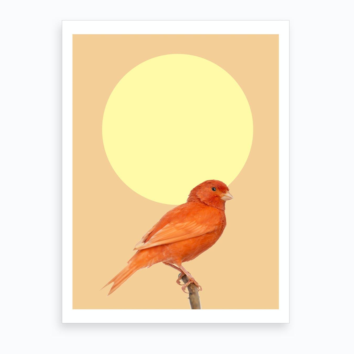 Japanese Sunbird Art Print