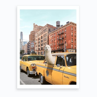 New York Alpaca Art Print