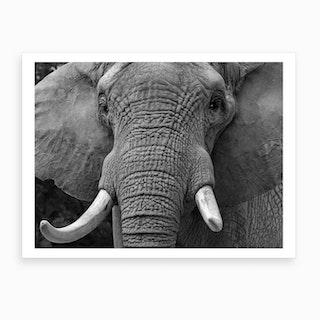 Elephants Head Art Print