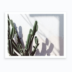 Californian Cactus Art Print