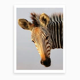 Zebra Head Art Print