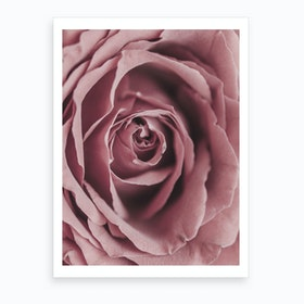 Powder Rose Art Print