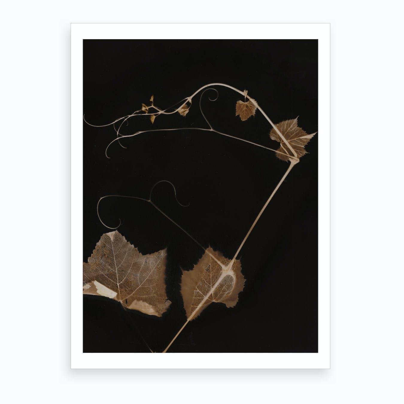 Sepia Grapevine Art Print