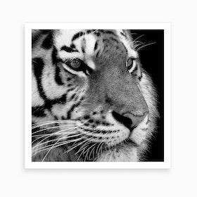 Tiger Black And White Square Art Print
