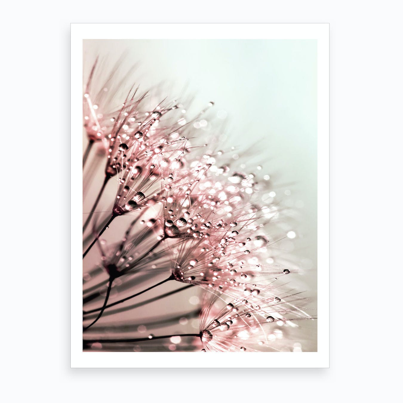 Blush Dandelion Art Print