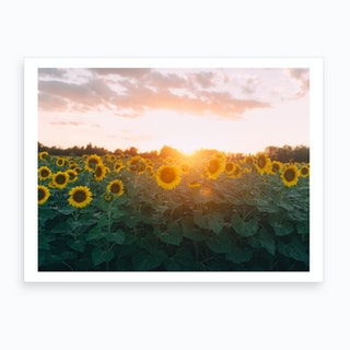 Sunflower Sunset Art Print