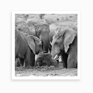 Elephants Come Together Art Print