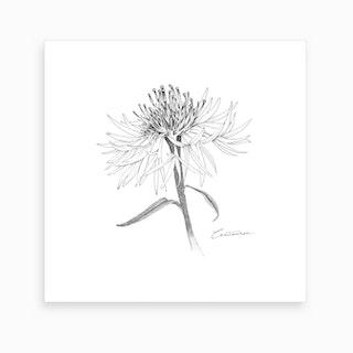 Centaurea 2 Art Print