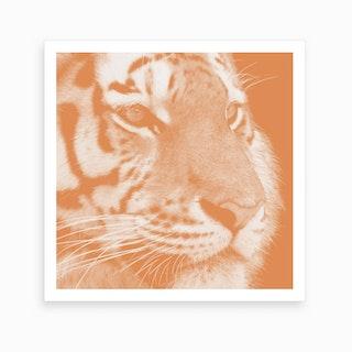 Tiger Pastel Salmon Square Art Print