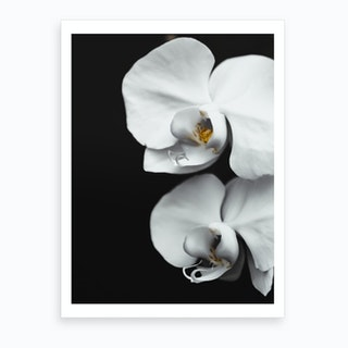 Orchid V Art Print