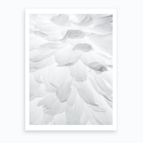 Feathers II Art Print
